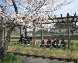手作り弁当持参の花見(春)