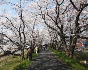 桜土手「桜祭り」